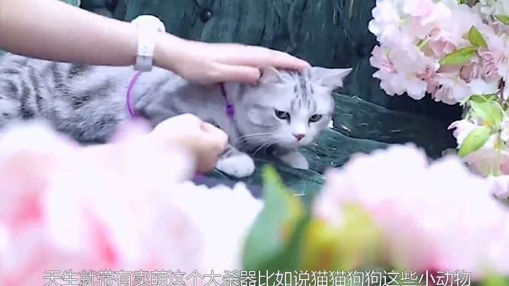 汪蘇瀧喜提小貓咪,誰注意他為辨別貓咪性別做了什么嚇壞汪涵